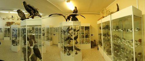 Кабинет зоологии и палеонтологии